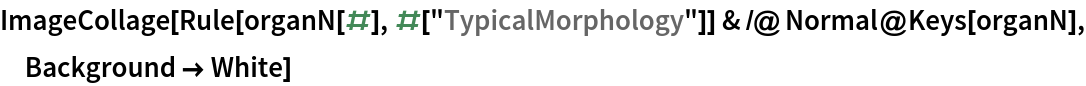 "ImageCollage[  Rule[organN[#], #[""TypicalMorphology""]] & /@ Normal@Keys[organN], Background -> White]"